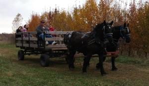 October wagon rides at Fairhaven Farms
